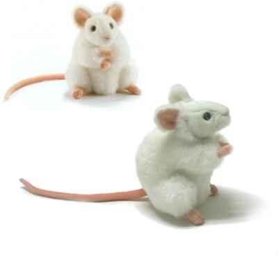 Image gallery souris blanc for Attraper souris maison