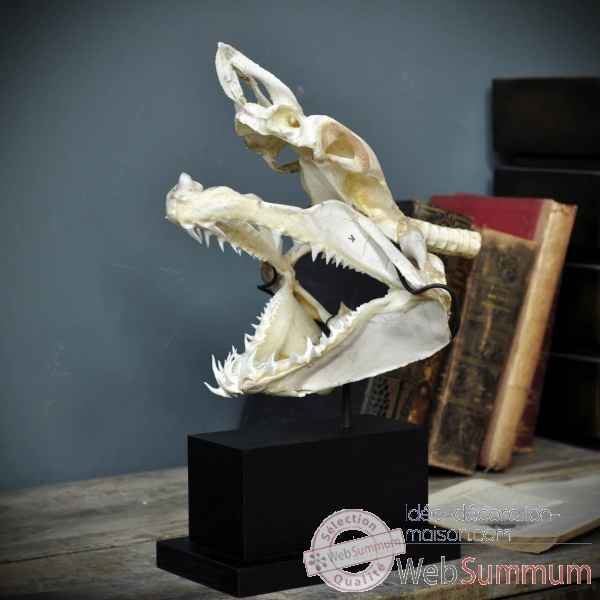 Crane complet de requin mako sur socle rectangle Objet de Curiosite -PU425-3