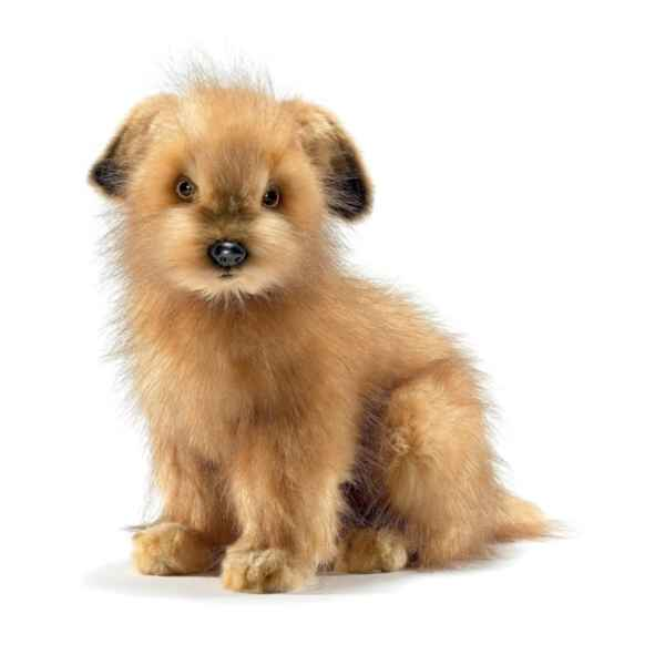 Peluche Norfolk terrier Anima-4126